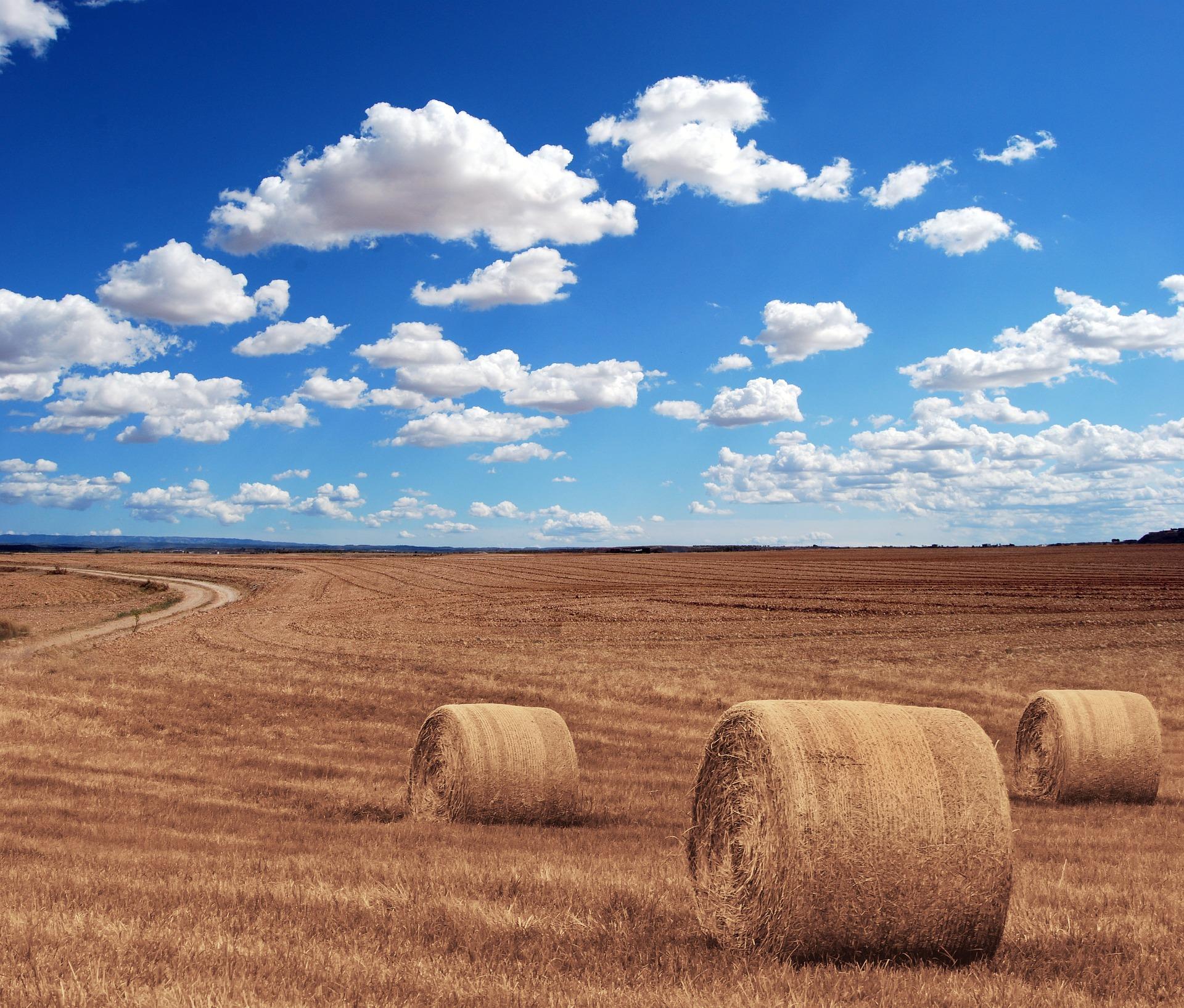 Agrárbiztosítások: Idén kedvezőbb lehet a díjtámogatás mértéke