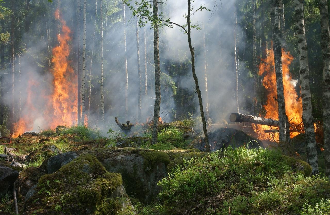 Közelgő nyári erdőtüzek: már az EU is készül rájuk